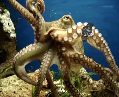 Shannon Kernaghan Octopus-timing Octopus Boy Rocks Culture Drinking Humor Sports