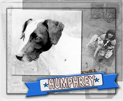 Shannon Kernaghan Humphrey-400 Real Dogs Humor Memories Pets and Animals